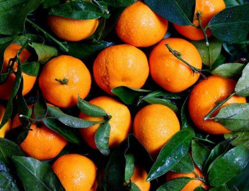 Easy Sugar Preserved Clementine Recipe